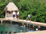 Swimming_with_the_Dolphins_at_Xel-Ha.jpg